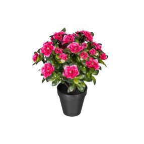 Azaleee pink, ca. 35 cm