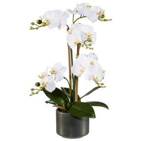 Orchidee im Keramiktopf, weiß, ca. 38 cm