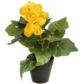 Begonie, gelb, 25 cm
