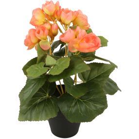 Begonienbusch 25 cm, lachsfarben