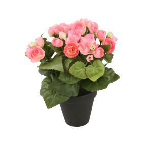 Begonie rosa, 26 cm