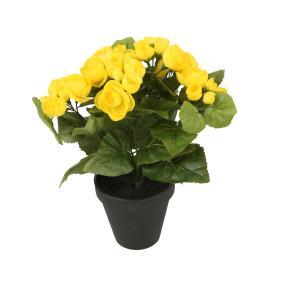 Begonie gelb, ca. 26 cm