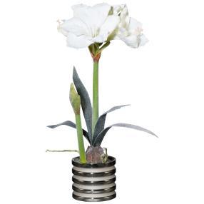 Amaryllis weiß, im Silbertopf, ca. 54 cm
