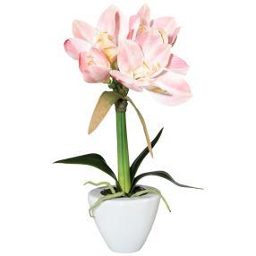 Amaryllis rosa, im Keramiktopf, ca. 37 cm