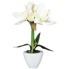 Amaryllis weiß, im Keramiktopf, ca. 37 cm