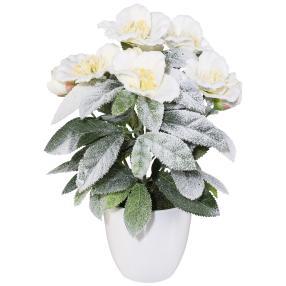 Christrosenbusch im Topf, weiß, 30 cm