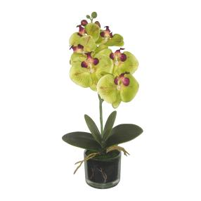 Orchidee im Glastopf, grün, 40cm