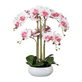 XXL Orchidee in der Keramikschale 53 cm