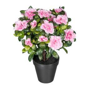 Azaleenbusch, pink, 35 cm