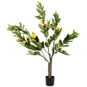 Zitronenbaum im Topf, 120 cm