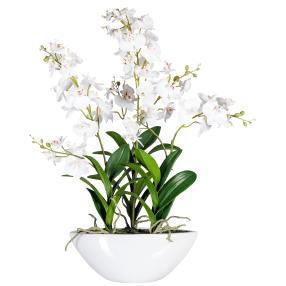 Orchidee Dendrobie in Keramikschale, weiß, 60 cm