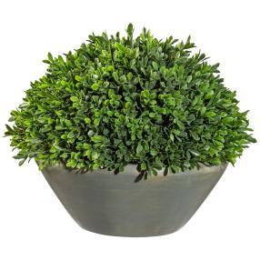 Buchsbaum-Halbkugel im Zementtopf, 40 cm