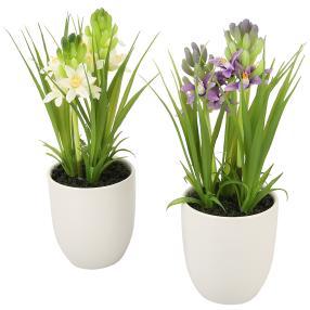 Hyazinthe im Keramiktopf, weiß & lila, 2er Set