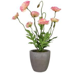 Mohnbusch im Zementtopf, rosa, 38 cm
