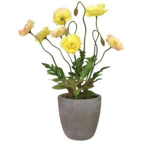 Mohnbusch im Zementtopf, gelb, 38 cm