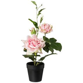 Rosenbusch im Topf, rosa, 40 cm