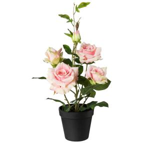 Rosenbusch im Topf, rosa, ca. 40 x 23 cm