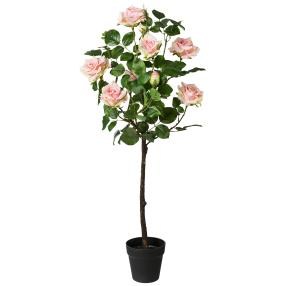 Rosenbusch im Topf, rosa, 95 cm