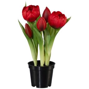 Tulpen gefüllt im Plastiktopf, rot, 25 cm