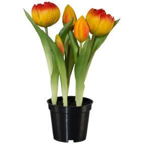 Tulpen gefüllt im Plastiktopf, orange, 25 cm