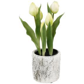 Tulpen im Zementübertopf, 5 Blüten, weiß, 25 cm