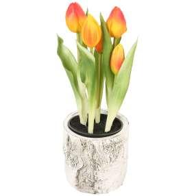 Tulpen im Zementübertopf, 5 Blüten, orange, 25 cm