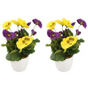 Stiefmütterchen lila-gelb, im Keramiktopf, 2er Set