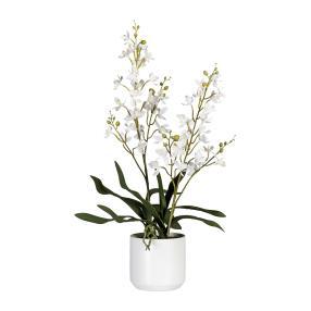 Orchidee Dendrobiee weiß im Keramiktopf, 60 cm