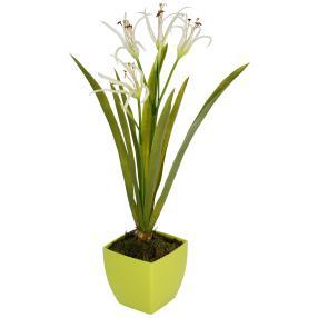 Orchidee im Topf, weiß, 60 cm