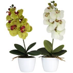 Orchideen im Keramiktopf, grün/weiß, 2er Set