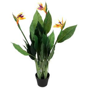 Strelizie, orange-lila, 100 cm