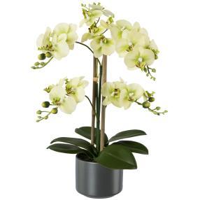 Orchidee im grauen Keramiktopf, gelb
