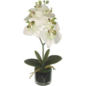 Orchidee im Glastopf, weiß