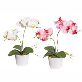 Orchideen im Keramiktopf, weiß und rosé, 2er Set