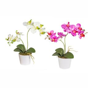 Orchideen im Keramiktopf, grün und lila, 2er-Set