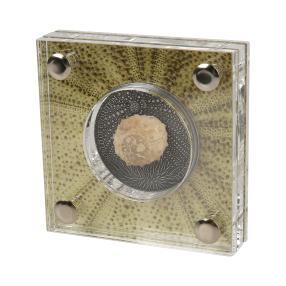 Silberurzeitmünze Seeigel