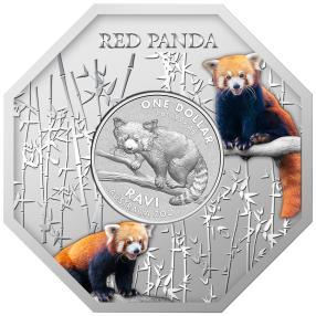 Roter Panda Barren