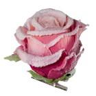 Rosenclips gefrostet 6er rosa - 100390500000 - 2 - 140px